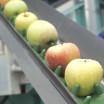 Apples on Food Conveyer