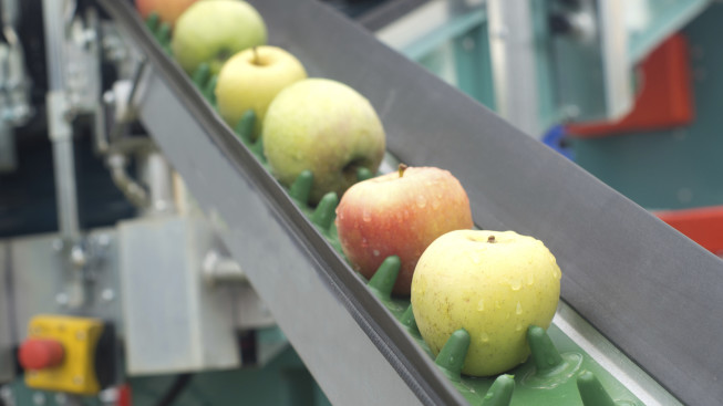 Apples on Food Conveyer